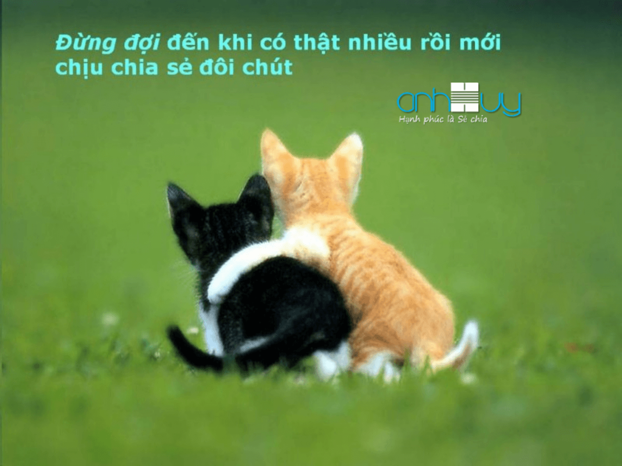 gioi-thieu-anh-huy.png